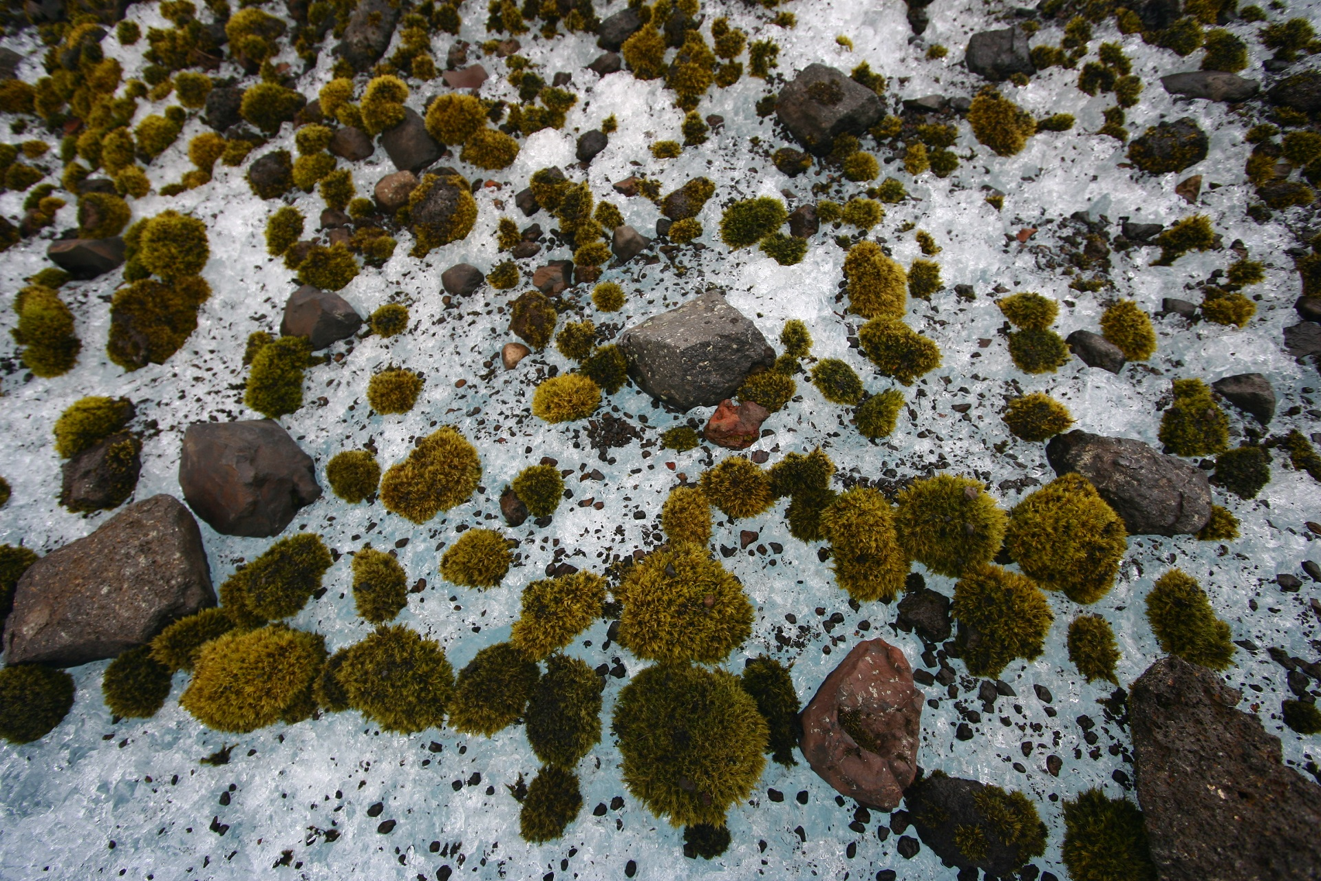 Glacial mice on Kvíárjökull outlet glacier. Photo: Hrafnhildur Hannesdóttir.
